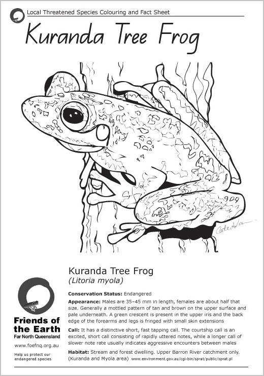 endangered-species-colouring-factsheets-frog